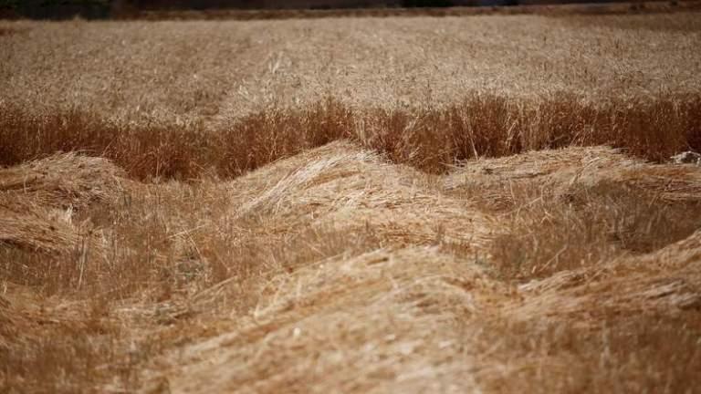 بلدية عيناثا الجنوبية وضعت خطة طوارئ لمواجهة نقص المواد الغذائية وبدأت بتوفير الدعم المالي لزراعة القمح والحمص والعدس في اراضي البلدة