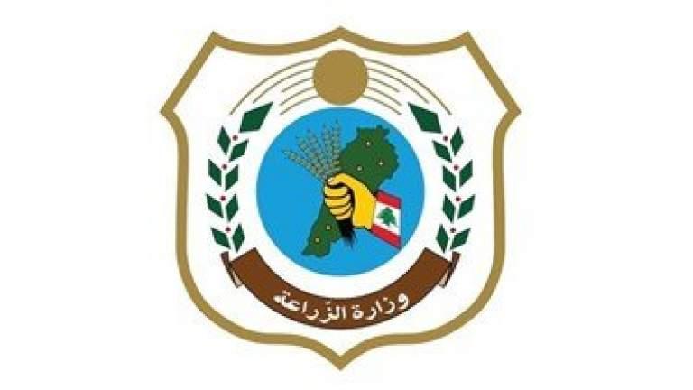 وزارة الزراعة ترصد دخول أسراب جديدة من الجراد عبر جرود بلدات حام وبريتال